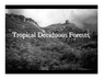 Tropical Deciduous Forests