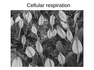 Chapter 11_Cellular respiration