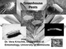 Greenhouse Pests