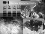 Thermodynamics and metabolism